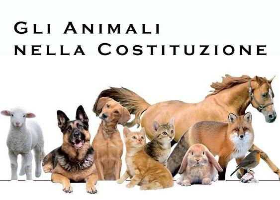 LE ASSOCIAZIONI AL GOVERNO: INSERIRE LA TUTELA DEGLI ANIMALI NELLA  COSTITUZIONE - Legambiente Animal Help