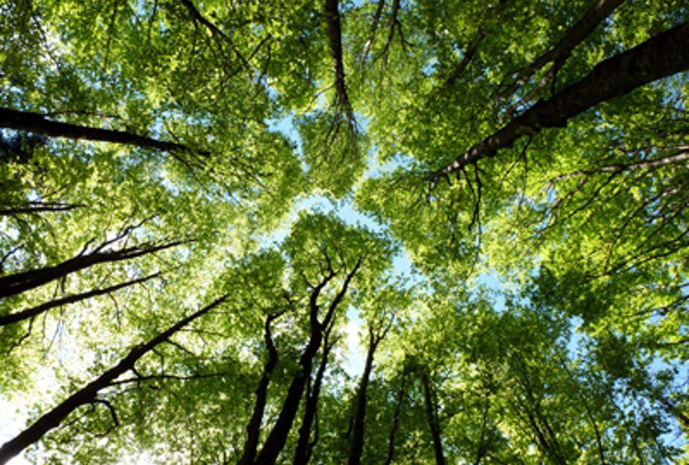 Continua il censimento degli alberi del parco