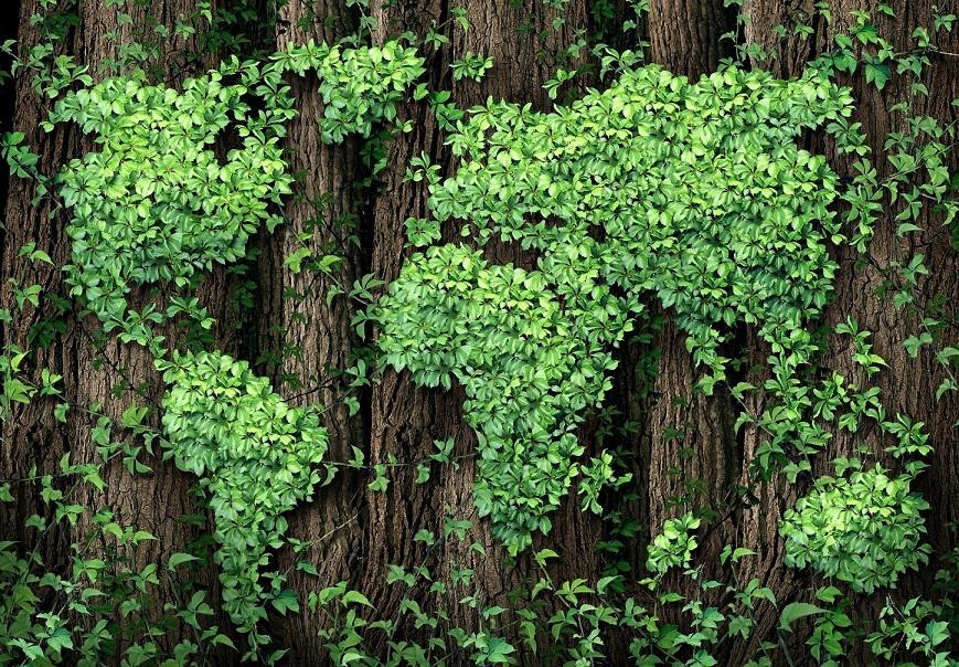 21 marzo: Giornata Internazionale delle foreste