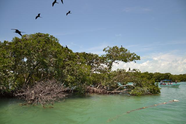 Quintana Roo, Punta Allen (México)