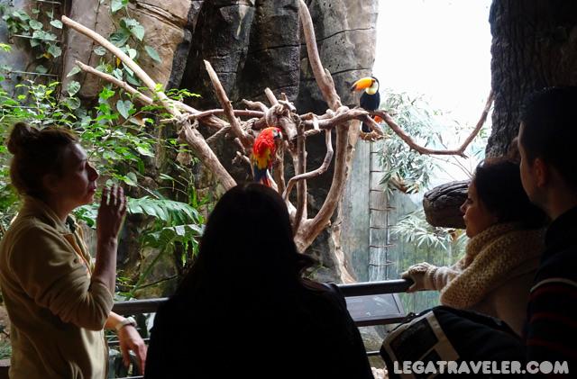 faunia-la-jungla