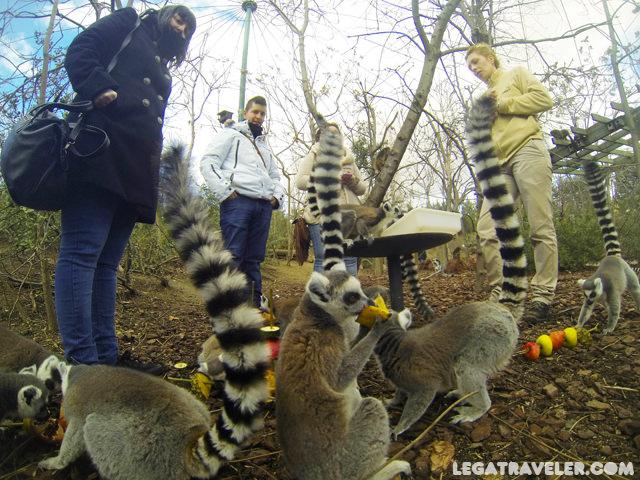 lemures-faunia-visita-vip