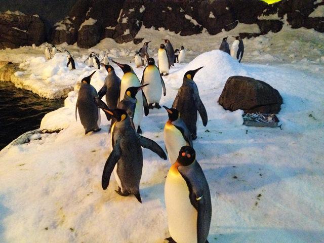 pinguinos-faunia