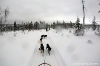 actividades-trineo-huskies-laponia-finlandia