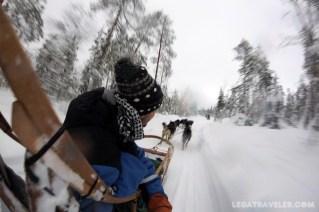 excursion huskies rovaniemi bearhill