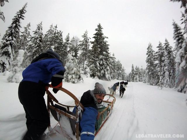 excursiones-huskies-laponia-rovaniemi