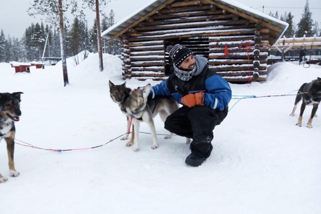 granja-huskies-laponia-rovaniemi-bearhill