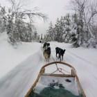 huskies-laponia-excursion-rovaniemi
