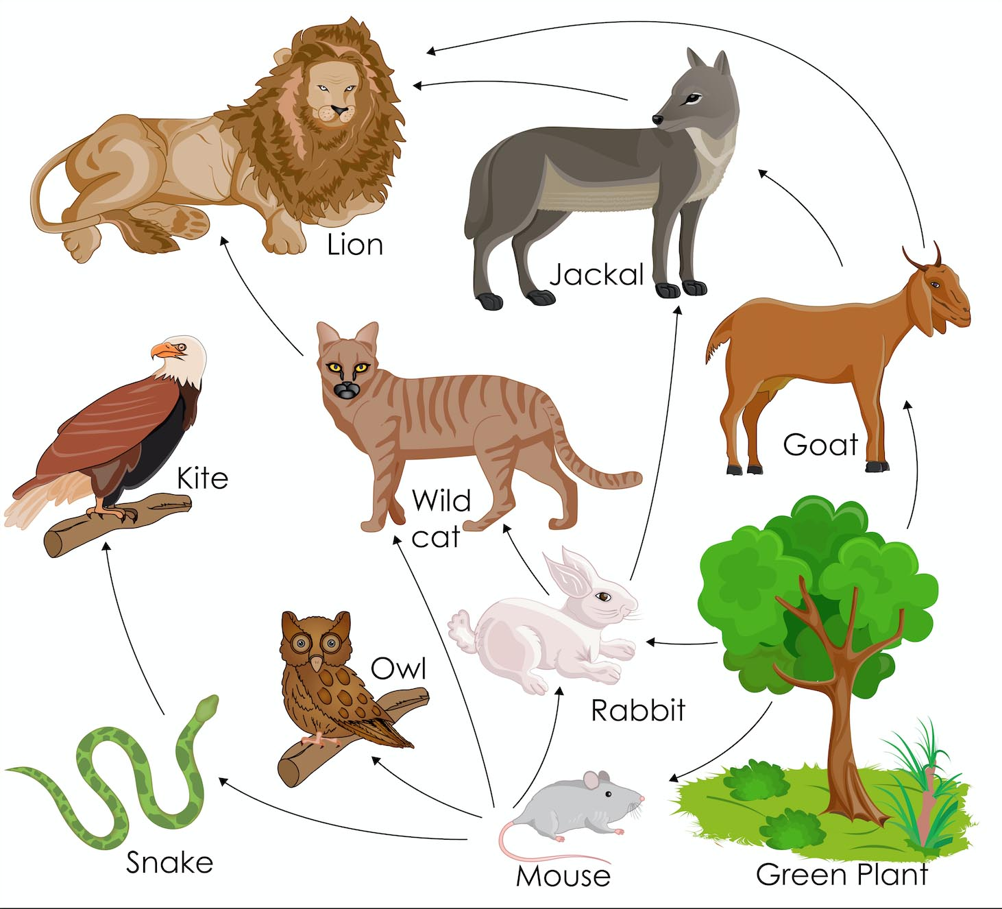 wolf food chain diagram fog light wiring without relay webs in an ecosystem science games legends of learning