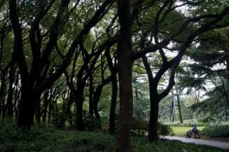 Des arbres, presque une forêt !