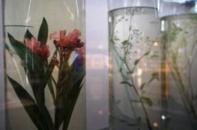 Plantes de la pharmacopée