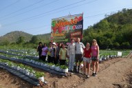 Photo at the strawberry farm