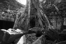 Tomb Raider tree