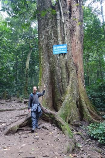Arbre de 1000 ans - Thousand year old tree