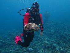 Concombre de mer / Sea cucumber