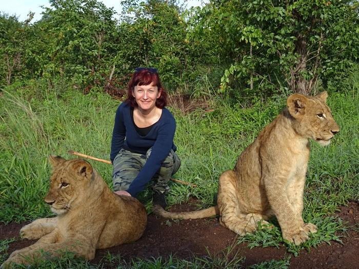 Afrika, oroszlánok, kaland, Zimbabwe