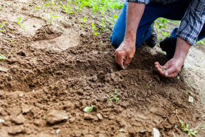 Find a Landscape Contractor with These Qualities