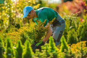 Landscaping Design in Hunt Valley, Maryland