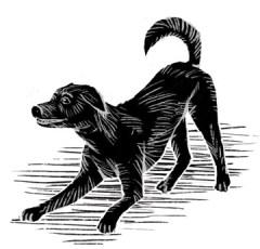 spot_dog
