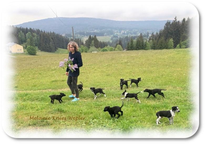 Das ist Züchterin und Musherin Sylvia Ulrich inmitten der neun Welpen des V-Wurfes auf einer Wiese oberhalb der Villa Hundeinander.