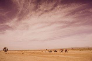 Xiomara Bender: Hassan mit Dromedaren, Sahara, Südlich der Oasenstadt M'Hamid © Xiomara Bender