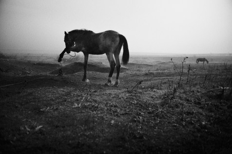 A horse chained at the leg, countryside 2016