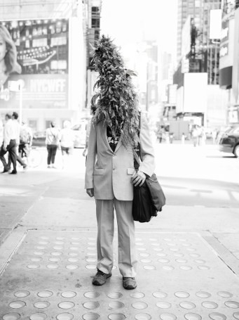 August 16th 2017: Pictures taken of Buddyapple weed on 42nd street , in New York City, USA. .WWW.PHILPENMAN.COM Cellphone: 917 496 1644