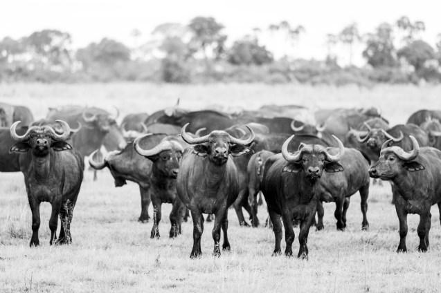 LFI_Botswana_2020©MarcStickler-14