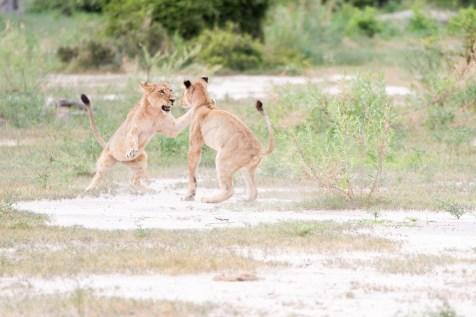 LFI_Botswana_2020©MarcStickler-17