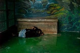Chimp, Samut Prakan