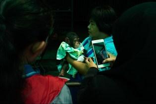 Baby chimp, Samut Prakan