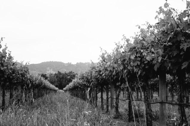 cabernet-vineyard-napa-valley