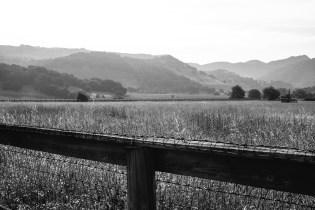 fields-napa-valley