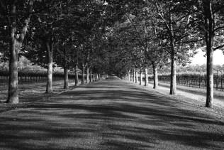 napa-valley-open-road
