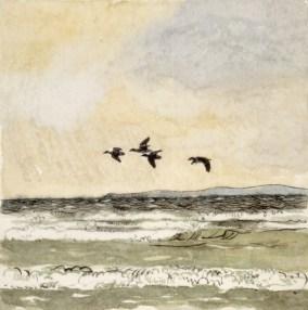 Trækkende edderfugle ved Hellebæk. 47 x 46 cm