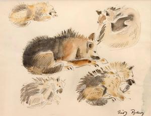 Grønlandsk slædehunde, studie