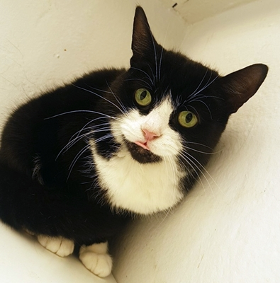 'Rosie' 4 and a half year old female. Rosie is looking for a new home due to her owners ill health.