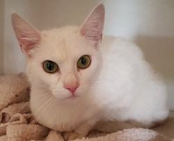 'Rodney' 22 month old castrated male. Rodney is looking for a home with Marty as his owner became homeless.