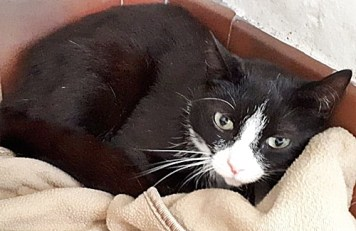 'Jonah' 2 year old Male. Jonah is looking for a new home due to his owners ill health.