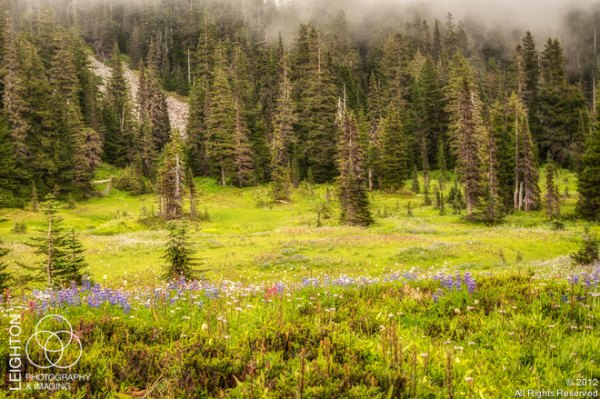 RainierWildflowers100