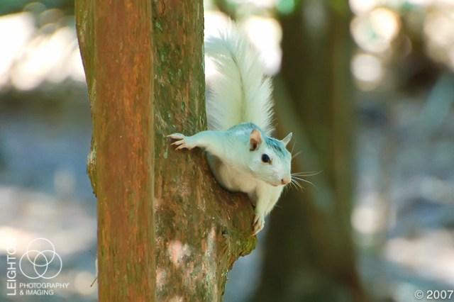 WhiteFoxSquirrel102
