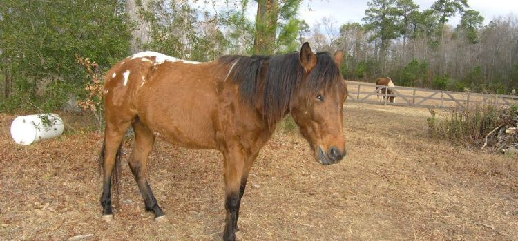 Splash – Adopted Out To His Forever Home~