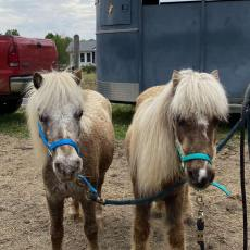 Laverne and Shirley – Rehabilitating – In Need of Sponsors