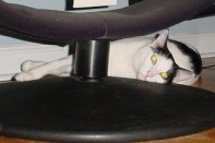 Cowboy Under a Chair