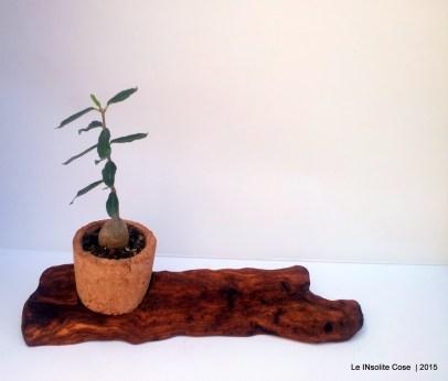 Piante grasse in tappi di sughero su corteccia di legno del mare - le INsolite Cose 2015 (18)