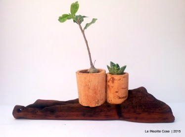 Piante grasse in tappi di sughero su corteccia di legno del mare - le INsolite Cose 2015 (7)