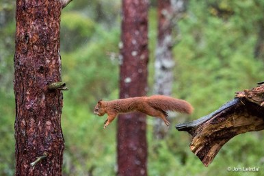 I had several attempts to get the squirrel in the air like this but few were sharp.