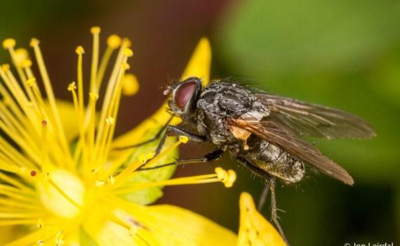 Macro fly 2