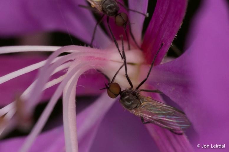 Weird flies