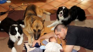 german-shepherd-with-border-collies-and-baby